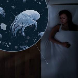 yatakta-alerjenler
